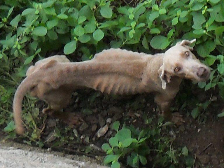 Alguien conoce esta perra que mamaacute guevo bien rico - 5 7