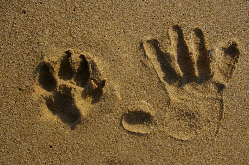 Resultado de imagen para patas de perros manos humanas