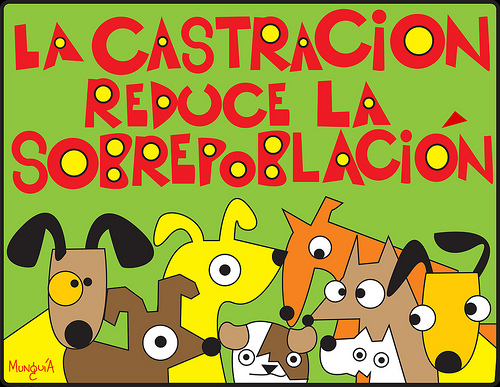 castracion-2