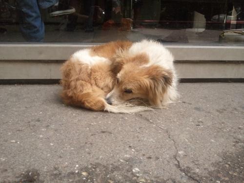 Coco, vivía en la calle