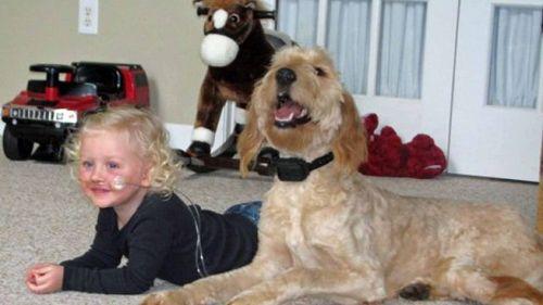anos-respira-perro-transporta-oxigeno_MDSIMA20120316_0112_4