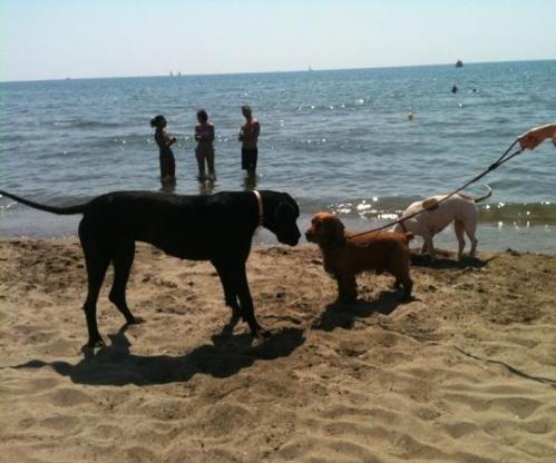 bau-beach (1)