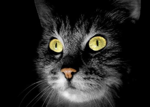 Gatos-fantasma-paranormales