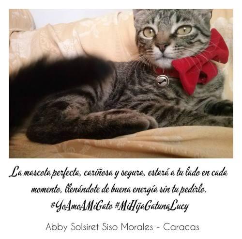 abby so