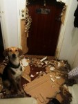 perros-traviesos-y-curiosos-13-405x540