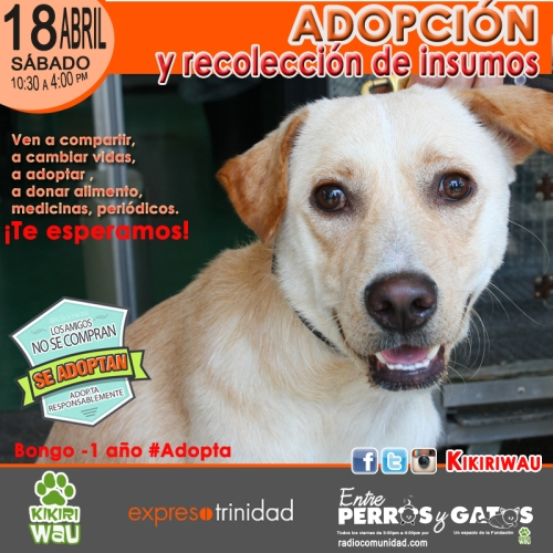 adopcion expreso copia