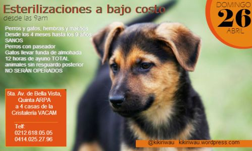 esterilización domingo 26Abril