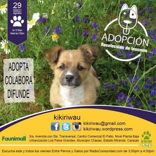 adopcionfaunimalagot2015-01