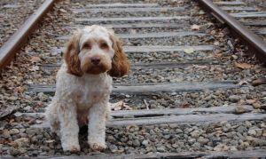 perros-perdidos-calle