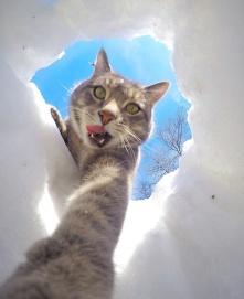 gato-manny-selfies-camara-gopro-2