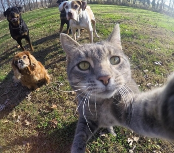 gato-selfie