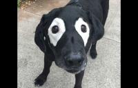 perro-se-vuelve-viral-internet