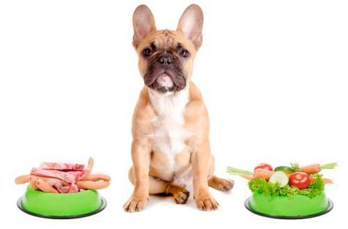 dieta-barf-para-cachorros