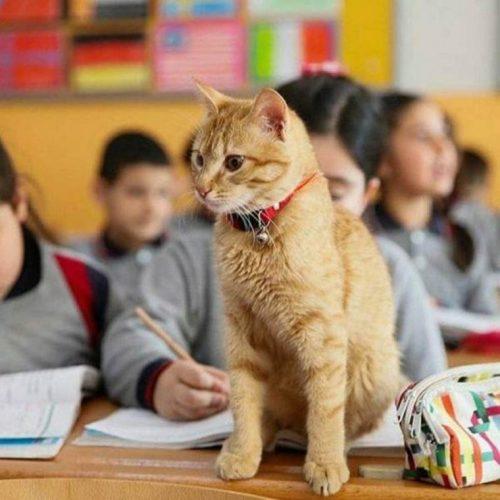 gatito-en-el-aula-10