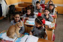 gatito-en-el-aula-2