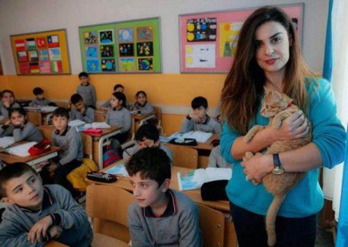 gatito-en-el-aula-3